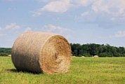 bales of hay